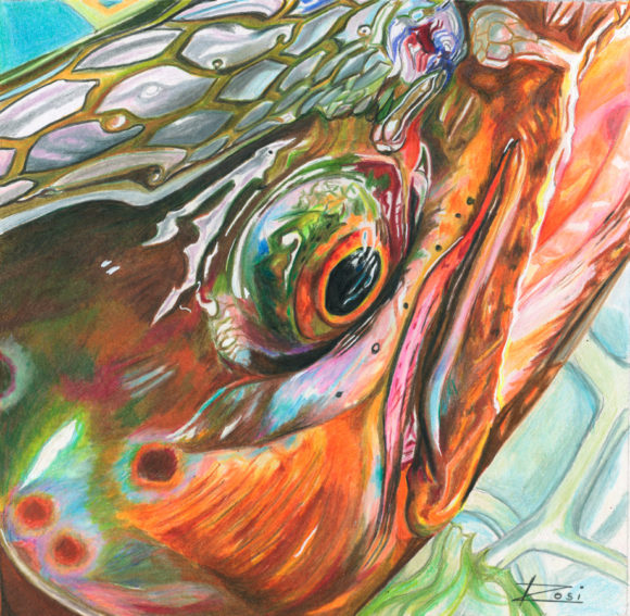 'Brown Trout' by Rosi Oldenburg