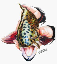 'Female Rainbow Trout' by Rosi Oldenburg