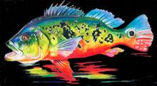 'Peacock Bass II' by Rosi Oldenburg