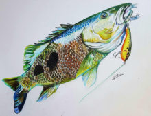 'Spot Tail Bass' by Rosi Oldenburg